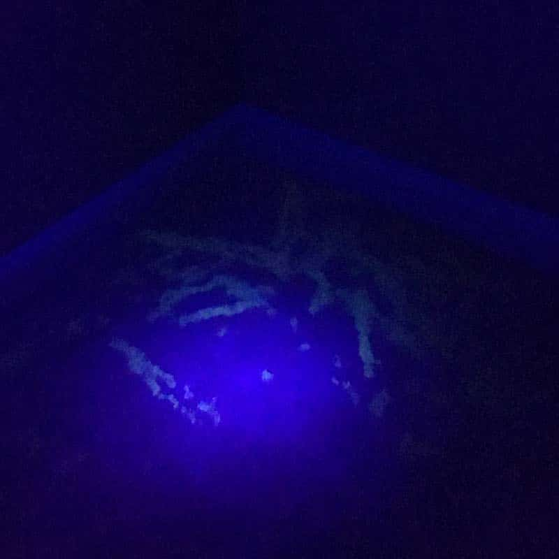 Blacklight-carpet-cleaning-pet-stains-1-min