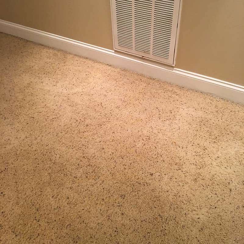 Blacklight-carpet-cleaning-pet-stains-4-min