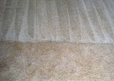 Pet-treatment-carpet-cleaning-greenville-sc-6-min