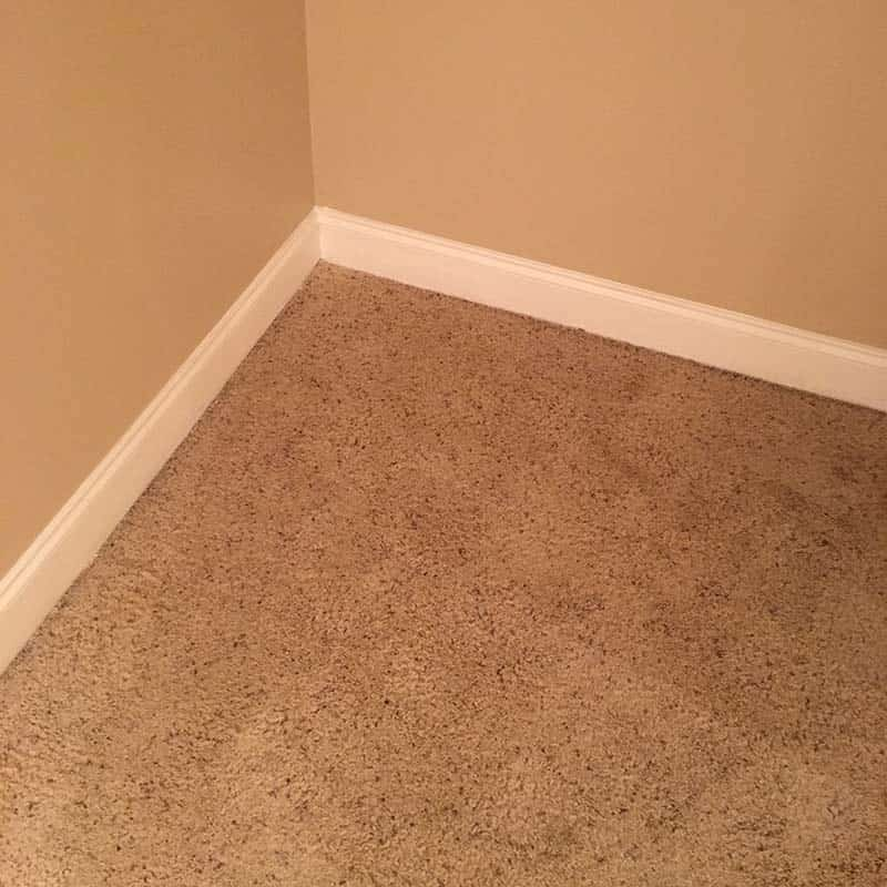 Carpet cleaning in Greenville, SC Pet Stain Removal with Blacklight service after picture