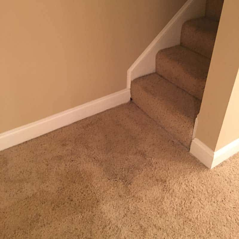 Carpet cleaning in Greenville SC - blacklight cleaning for pet stains after picture